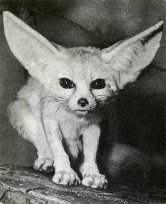 http://animal.geoman.ru/books/item/f00/s00/z0000000/pic/st001_19.jpg